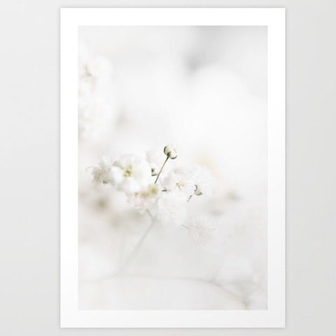 Framed Art | Gypsophila l White Frame