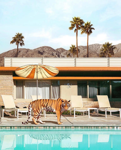 Framed Art | Pool Party Tiger