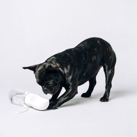 Thirsty Dog Bottle | Original White