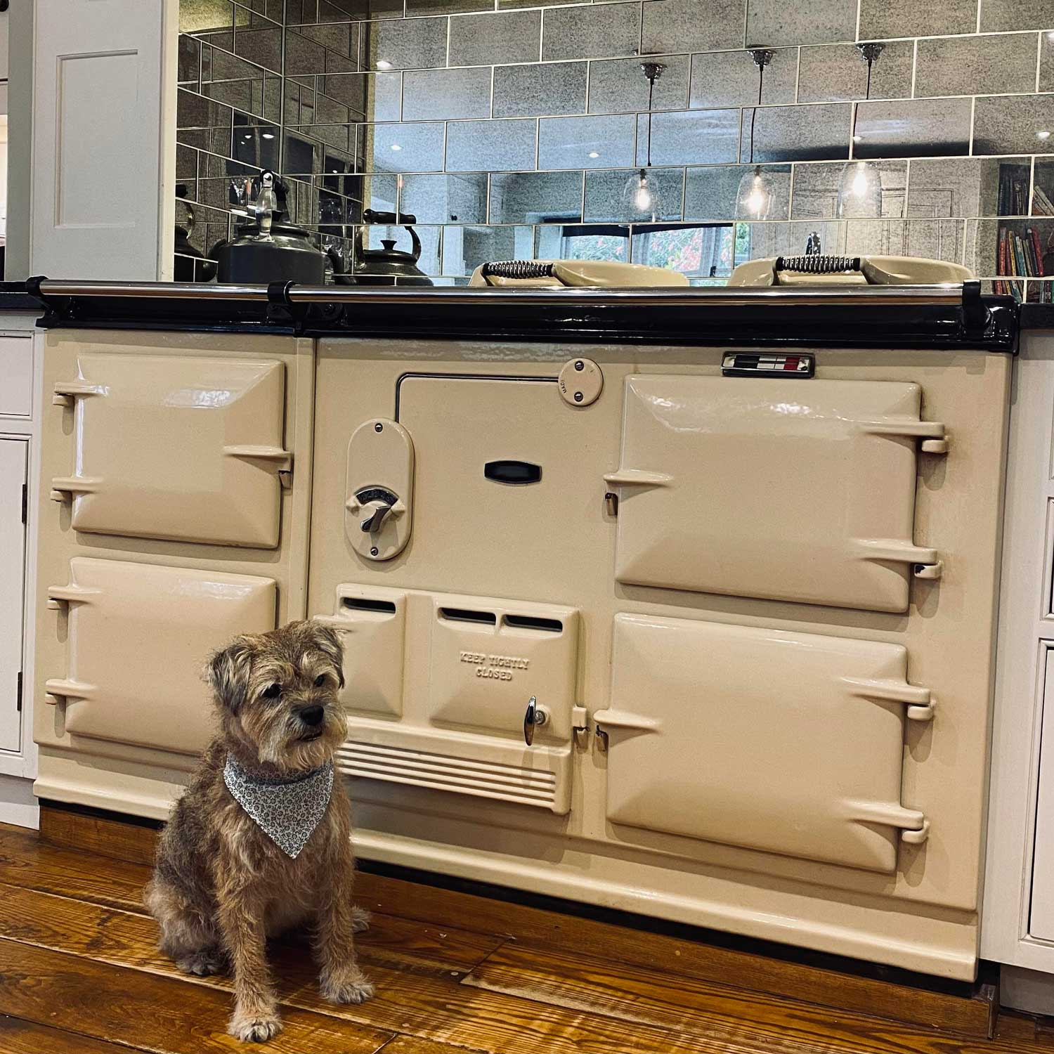 Dogs + Aga range cookers? Yes please!
