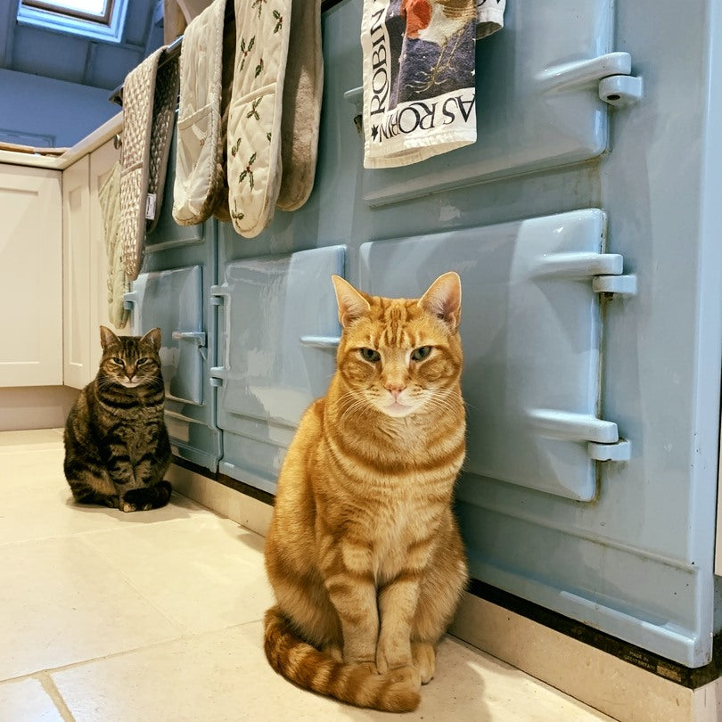 Two cats with Aga range cooker