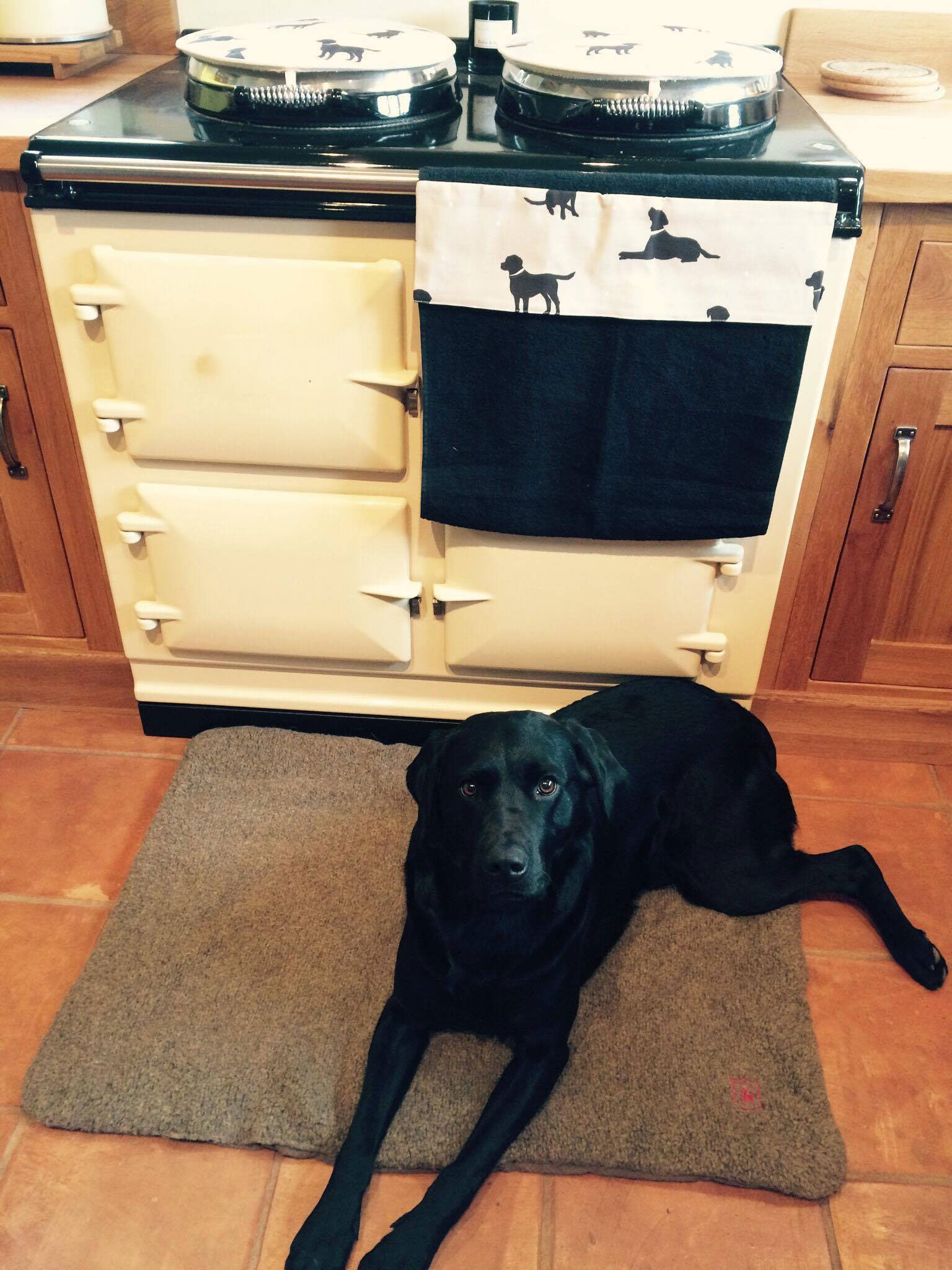 Black labrador with cream Aga range cooker