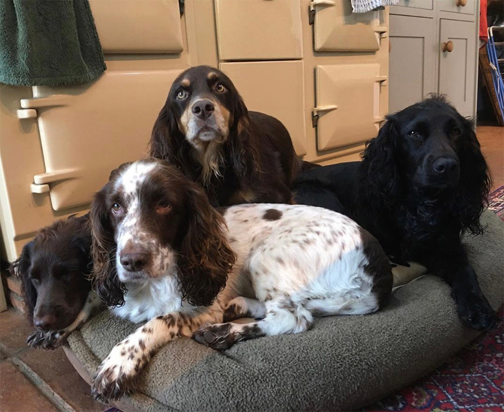 Four cocker spaniels infront of a cream aga range cooker 4 oven