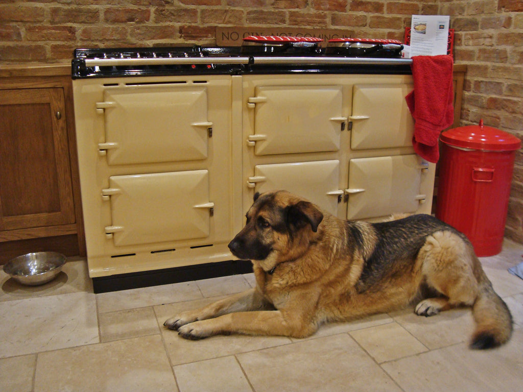 A large handsome german shepherd dog infront of a 4 oven Aga range cooker