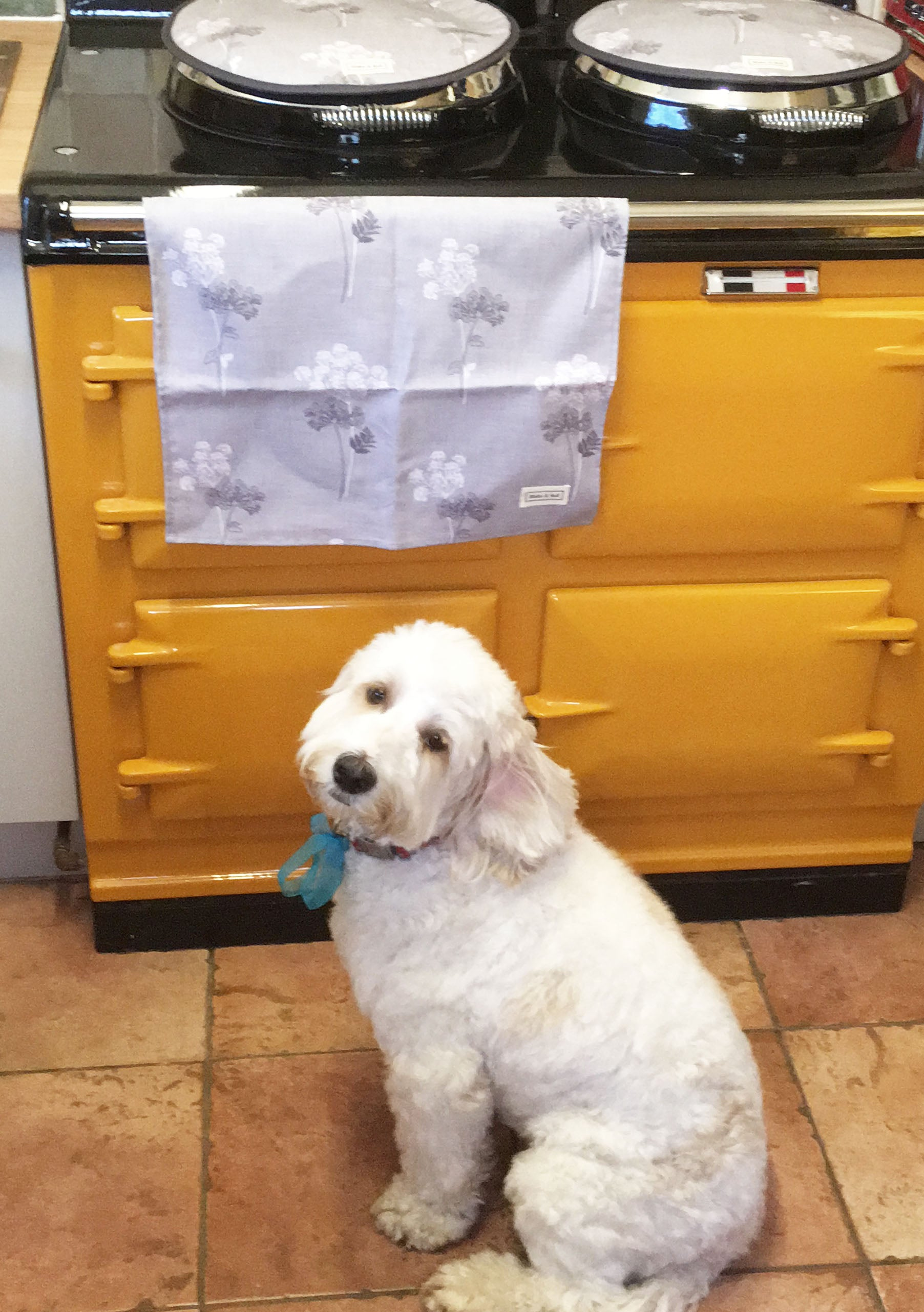 Golden yellow Aga range cooker with dog