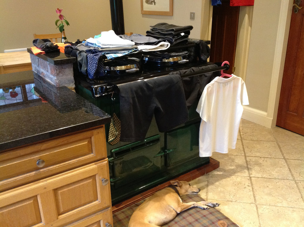 drying dog