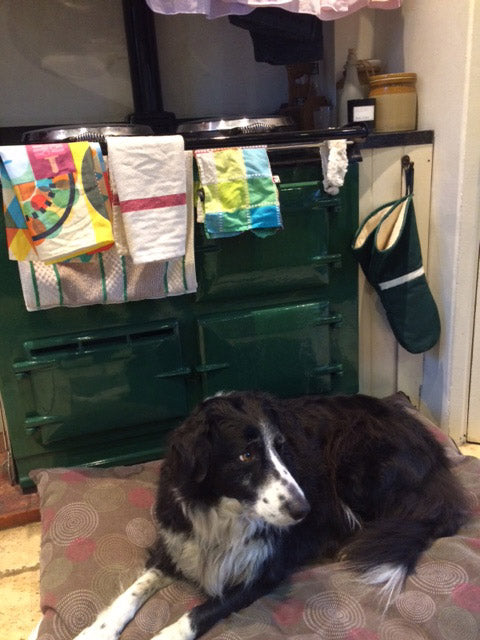 Damp dog in front of Aga range cooker