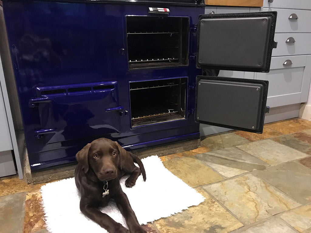 A chocolate labrador pup in front of a royal blue aga range cooker