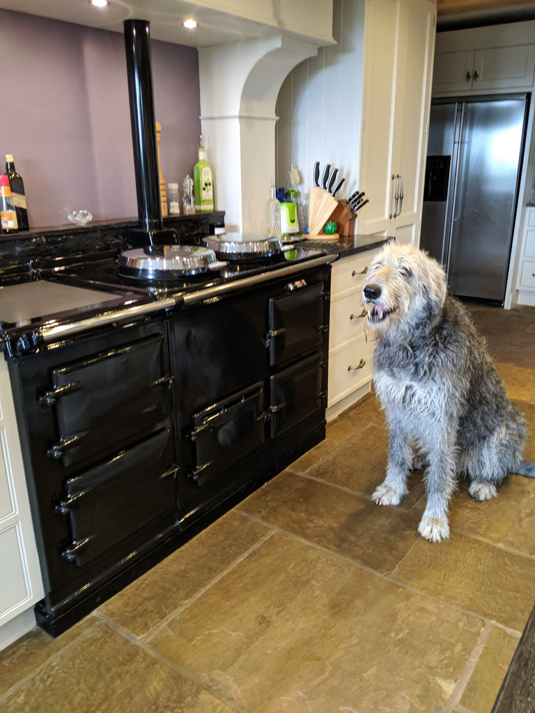 A wolfhound by a black aga range cooker