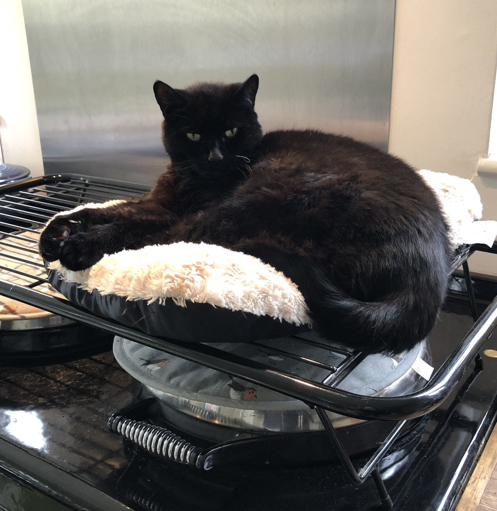 Black Cat on top of an Aga range cooker