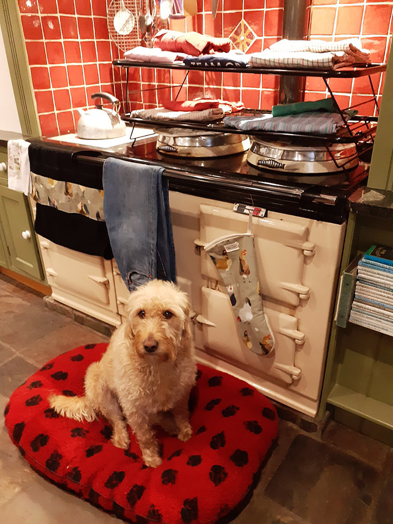 A pup infront of an Aga range cooker with a drying rack and chicken pattern textiles.