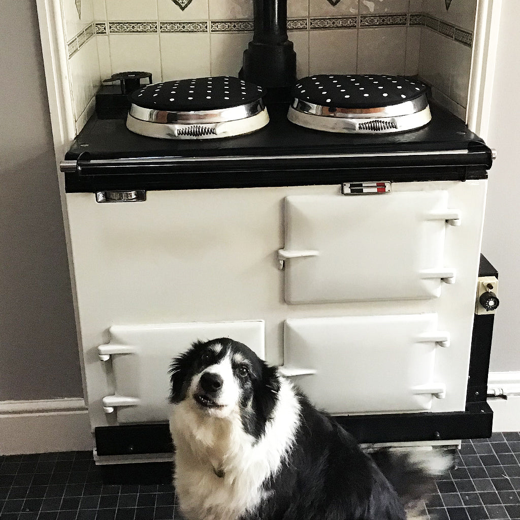 A collie pup infront of an Aga range cooker