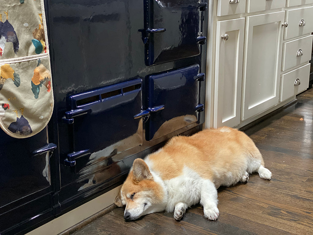 A corgi in front of an Aga range cooker