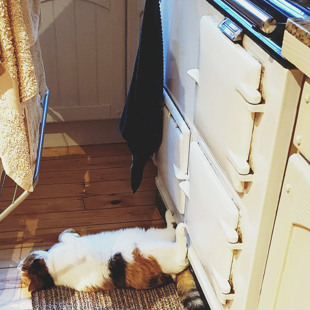 A cat warm by an Aga range cooker