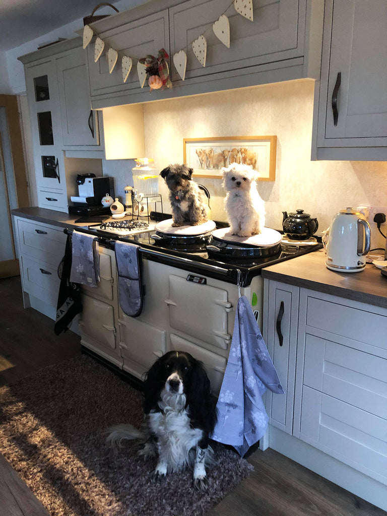 Two pups sat on hob covers on top of an Aga range cooker