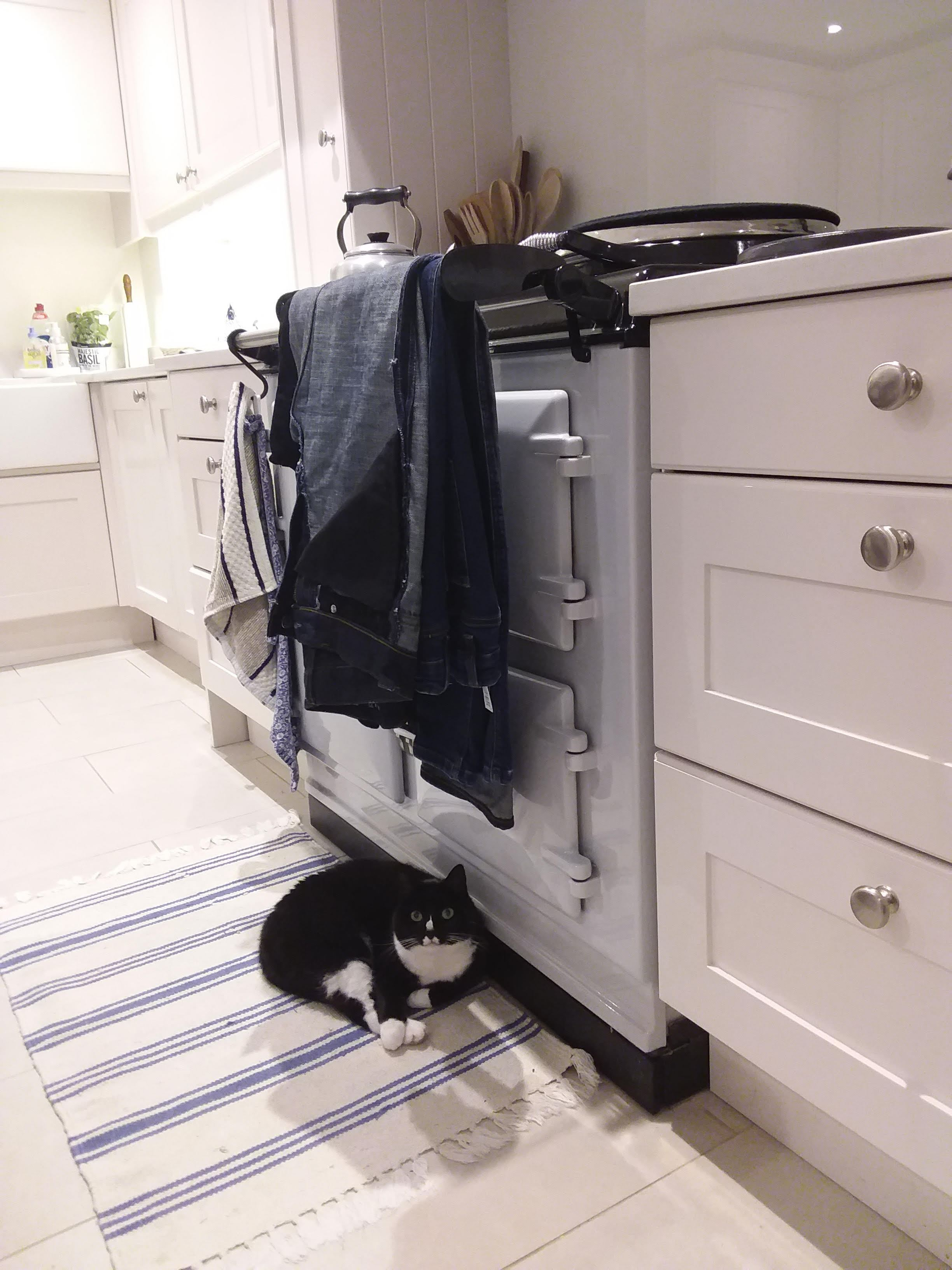 Aga range cooker and cat