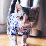 Warm Cat Clothes Autumn Winter Pet Clothing For Small Cats Dogs Cotton Cat Costumes Soft Kitten Kitty Coat Jacket Puppy Outfit