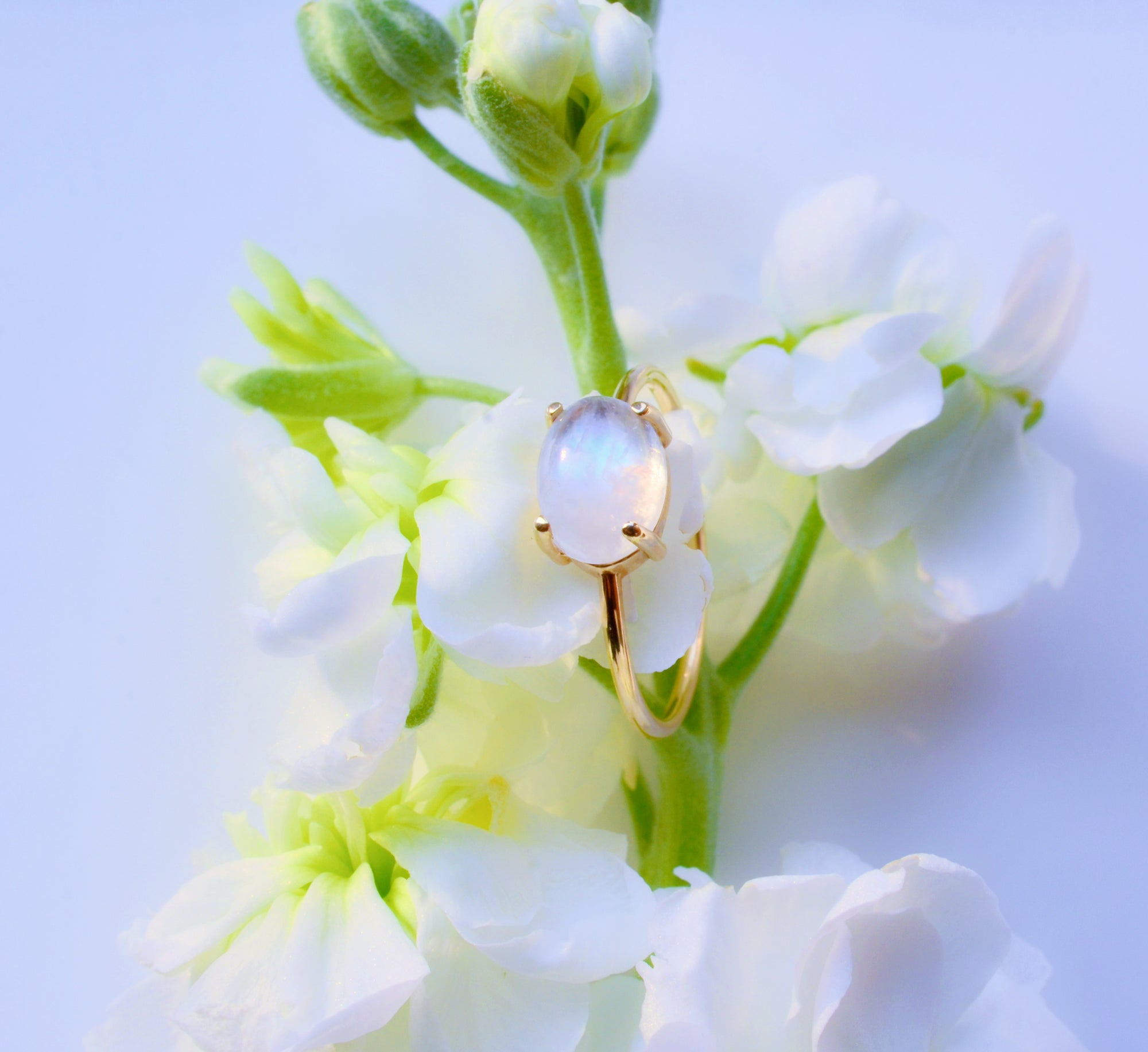 How To Care For Your Moonstones