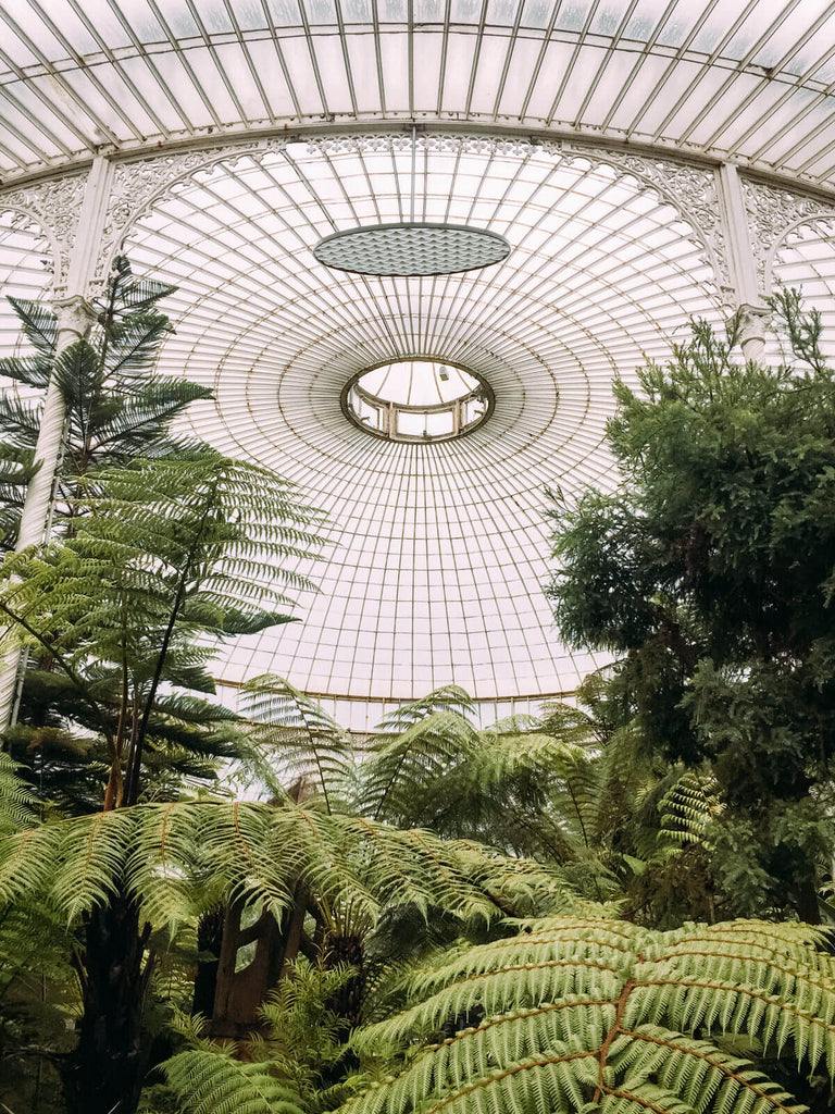 Grand Angle Pro + iPhone 6s - Jardin botanique de Glasgow -Black & Wood