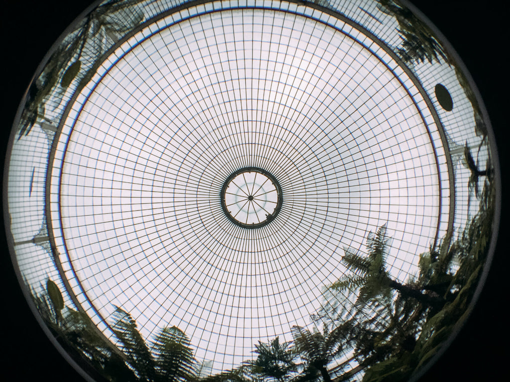 Fisheye + iPhone 6s - Glasgow Botanical Garden - Black & Wood