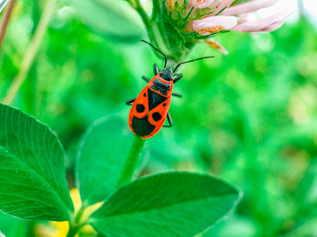 Bug Vibrant - Hand luggage Only -Macro Pro