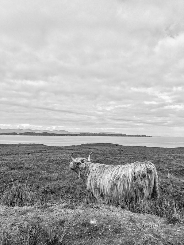 Cow Black and White - Hand luggage Only - Wide Angle Pro