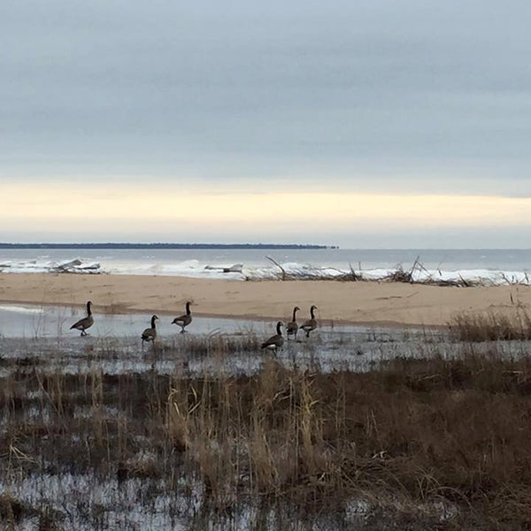 Lake Michigan, Geese, Cold December