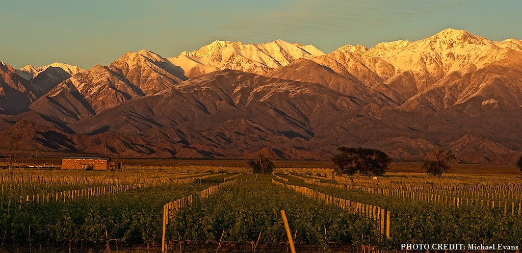 Vineyard with Andes mountains in background