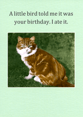 Birthday Card - Little Bird Told Me