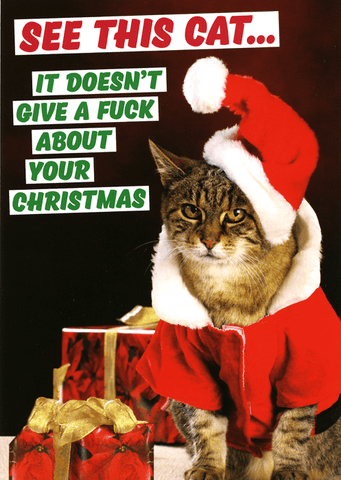 Cat - doesn't give a fuck about your Christmas