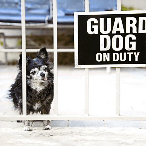 Guard dog on duty