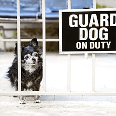 Funny Cards - Guard Dog On Duty