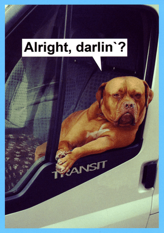 Funny Cards - Alright, Darlin'?