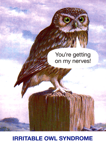 Irritable Owl