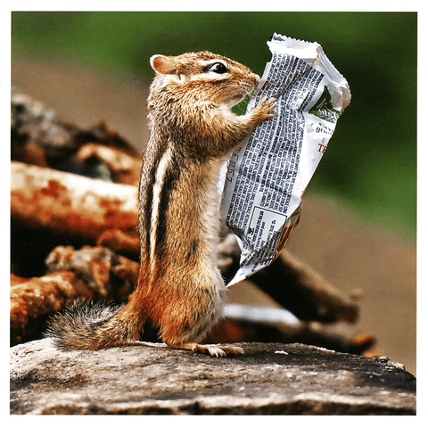 Funny Cards - Squirrel Reading Newspaper