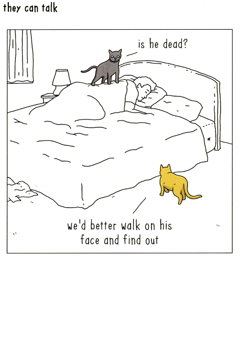 Funny Cards - Cats - Sleeping Owner