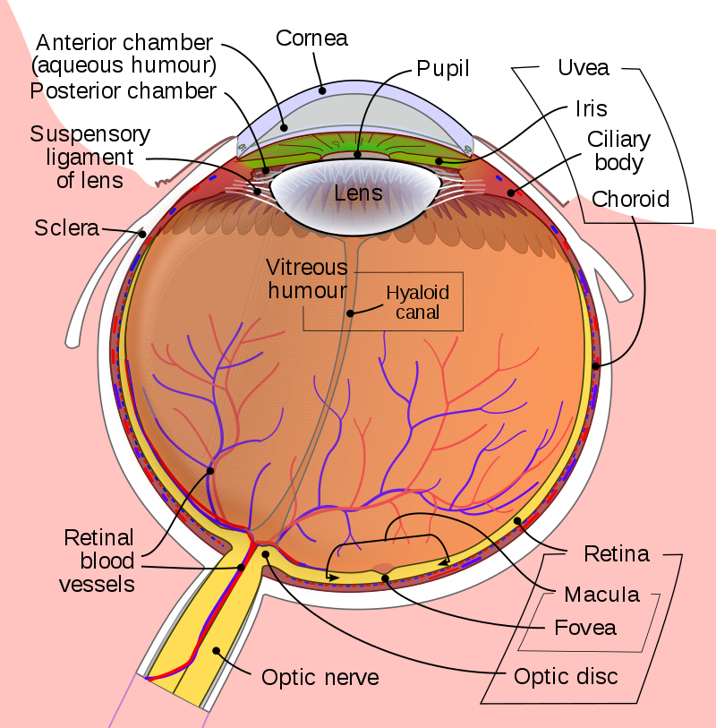 Jane's Blog Eye Health: Vitreous Detachment / Vitreomacular Traction