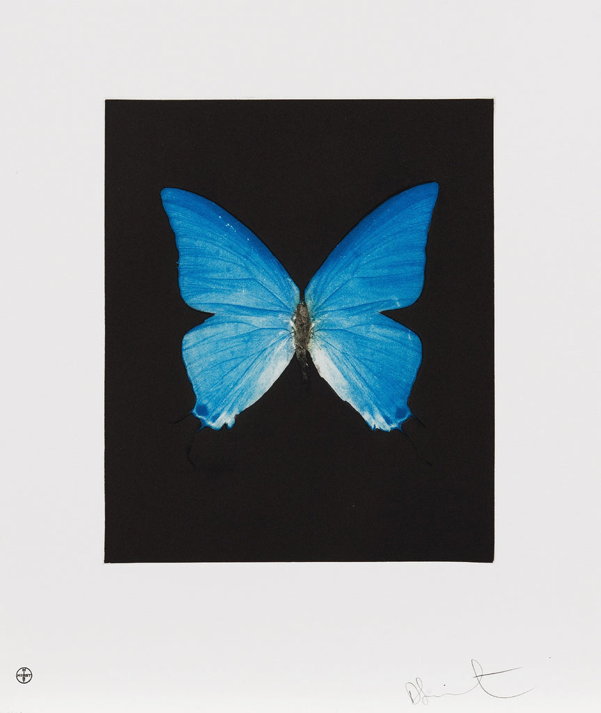 "Damien Hirst ""Providence"" Butterfly Etching"