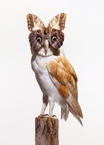 Nancy Fouts Owl Butterfly Taxidermy