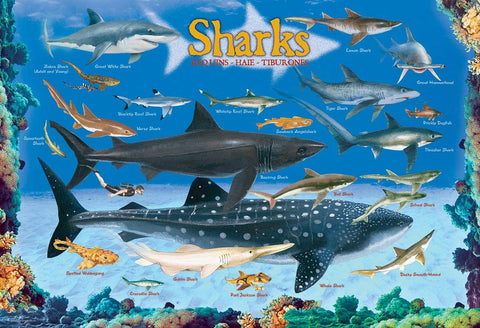 EuroGraphics Sharks 100 Piece Jigsaw Puzzle