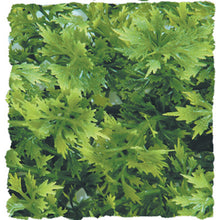 Load image into Gallery viewer, Natural Bush™ Plastic Plants Australian Maple