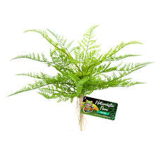 Load image into Gallery viewer, Naturalistic Flora Plastic Plants Lace Fern