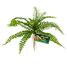 Load image into Gallery viewer, Naturalistic Flora Plastic Plants Sword Fern