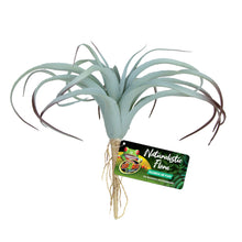 Load image into Gallery viewer, Naturalistic Flora Plastic Plants Tillandsia Air Plant