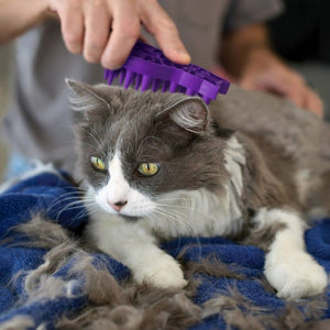 using KONG cat zoomgroom