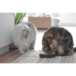 BeOneBreed Porcelain Bowl for Cats - 250ml / 8oz