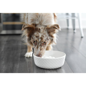 dog drinking from BeOneBreed Cool Bowl for Dogs - 1L / 33oz Cooling Bowl