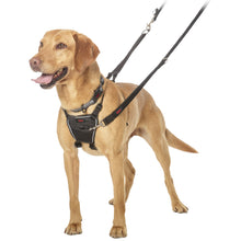 Load image into Gallery viewer, Halti® No Pull Harness for Dogs Medium On Labrador va2