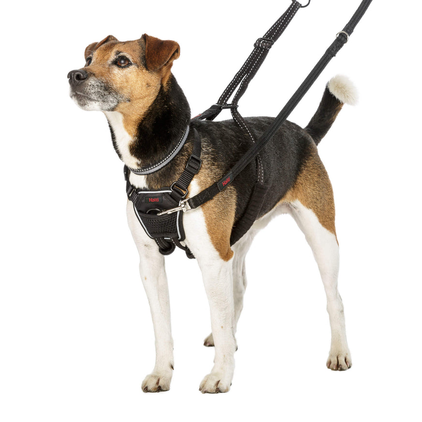 Halti® No Pull Harness for Dogs Small on Jack Russel va1