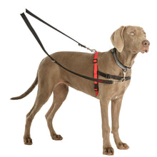 Load image into Gallery viewer, Halti® Double-ended Training Leash Double Clip On Weimaraner va0